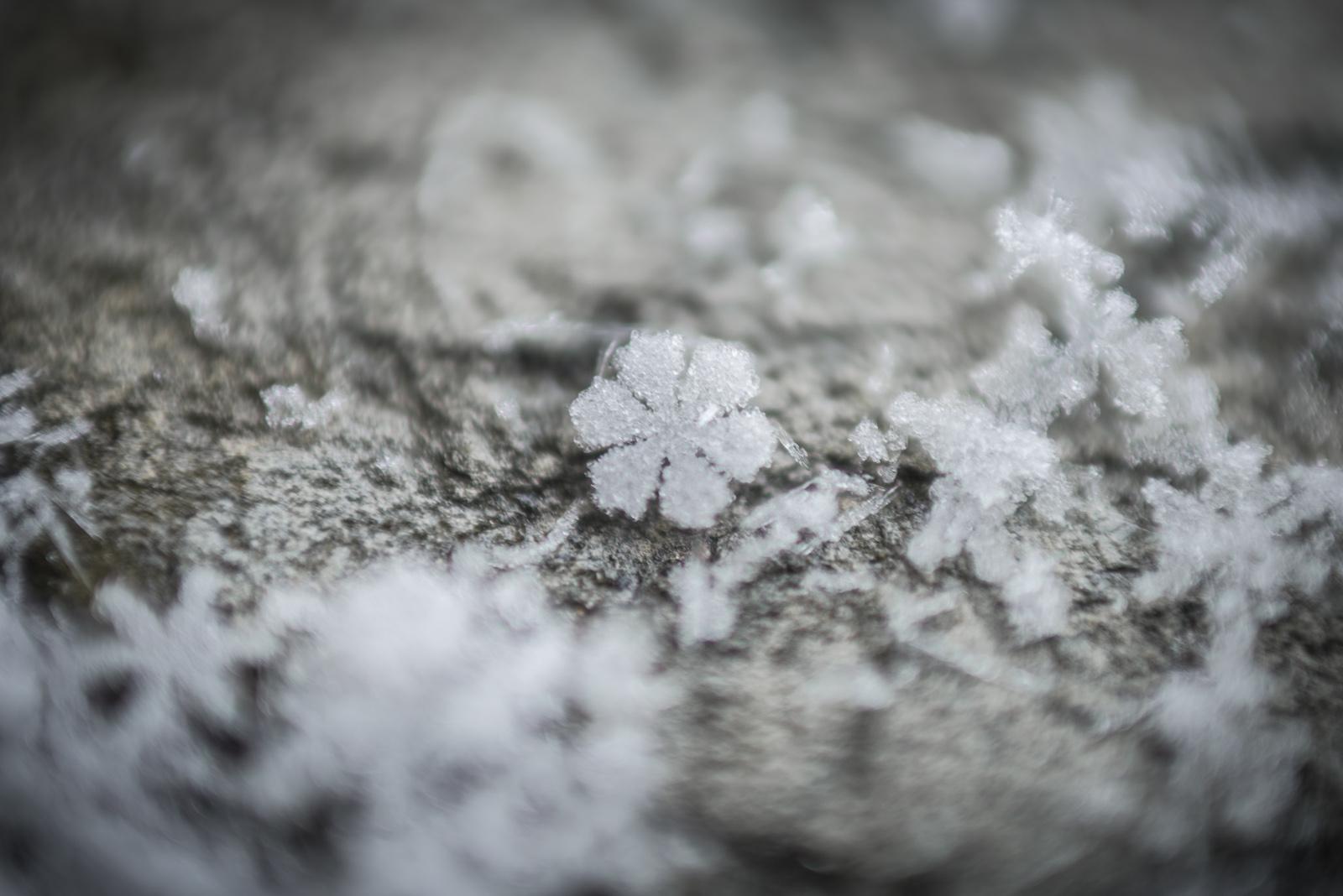 Snowflake | Feb 2014